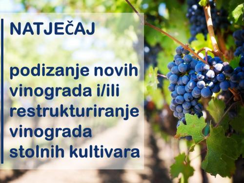 Objavljen natječaj iz Programa ruralnog razvoja RH za podizanje i/ili restrukturiranje vinograda